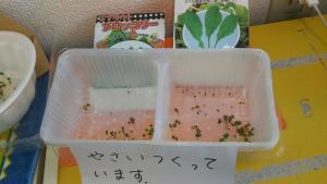 野菜栽培2